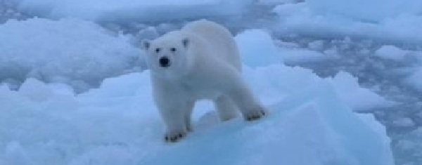 Polar Bear Ice Manufacturers And Suppliers Of Cube Ice
